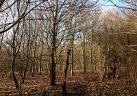 Woodland at Green Street Hoxne Main Pic